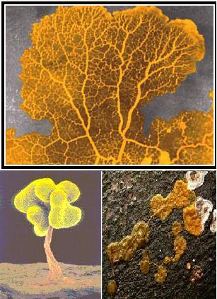 El hongo de las uñas naftifin