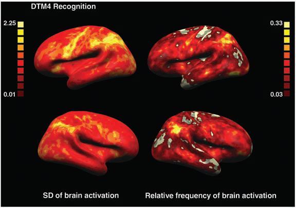 dibujo20090327fmrirelativefrequencybrainactivationmaps1