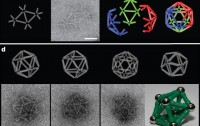 Dibujo20090521_DNA_Heterotrimerization_icosahedra_compared_to_magnetrix_one