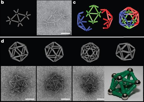 Dibujo20090521_DNA_Heterotrimerization_icosahedra_compared_to_magnetrix_one