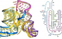 Dibujo20091127_Superposition_two_Ribbon_representation_ligase_ribozyme_left_and_right_Secondary_structure