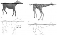 Dibujo20100626_floating_giraffe_model_versus_floating_horse_model