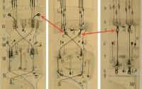 Dibujo20101110_santiago_ramon_y_cajal_drawings_with_information_flow_left_panel