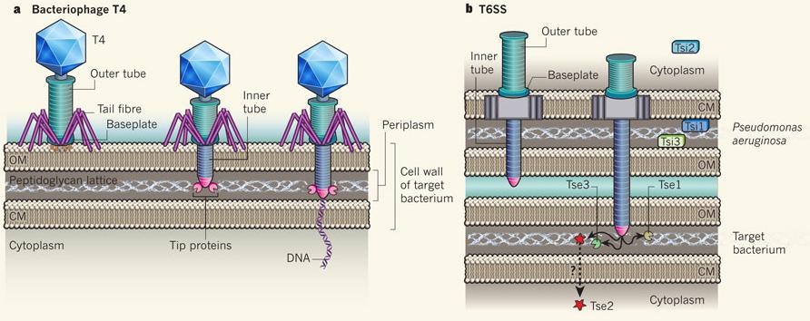 como se inyectan los esteroides