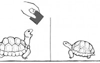 Dibujo20110930_diagram_experimantal_setup_yawning_contagious_in_red-footed_tortoise