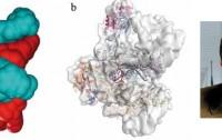 Dibujo20111001_Guillermo_Gimenez-Gallego_protein_gp41_AIDS_virus