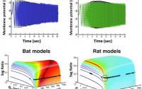 Dibujo20130421 bats - rats - theta waves