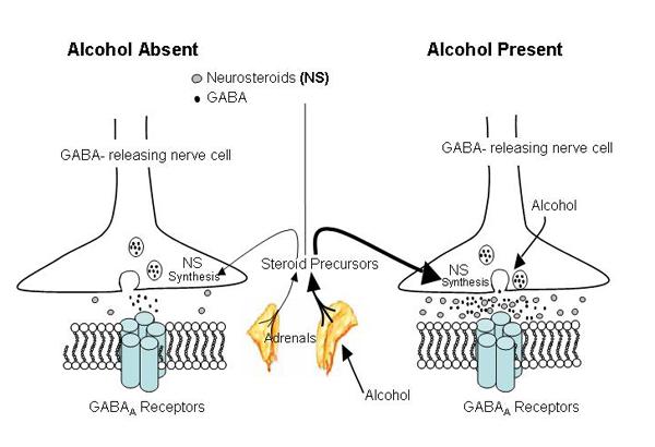neurosteroids wikipedia