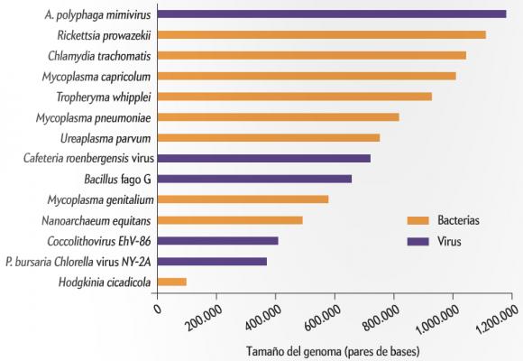 Dibujo20140305 genoma virus gigantes - bacterias - investigacion y ciencia