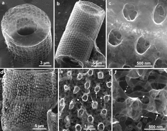 Dibujo20140825 sem images graphene replicas from diatom frustules - scientific reports