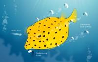 Dibujo20150115 boxfish instability - nature com - 517274a-f1