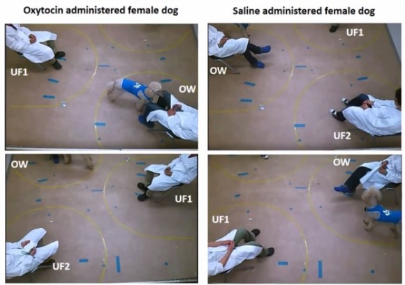 Dibujo20150419 oxytocin administered female dog - saline adm female dog - sciencemag org