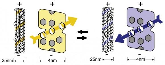 Figure3-hameroff-penrose
