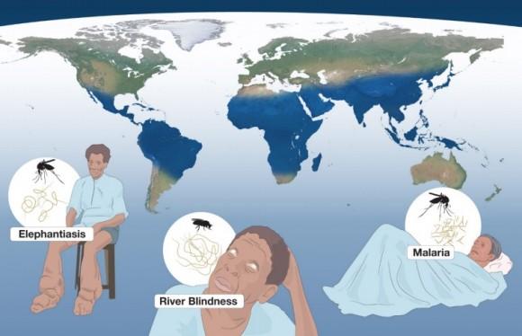 Dibujo201401005 elephantiasis - river blindness - malaria - tu - Campbell - Omura - medicine nobel prize 2015