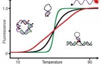 Dibujo20160427 Programmable Quantitative DNA Nanothermometers nanoletters