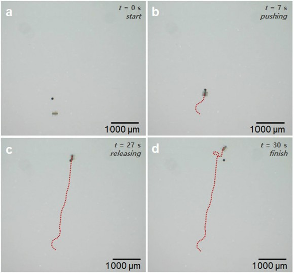 Dibujo20160803 Time lapse images of the targeted micro-particle transportation with the ciliary microrobot srep30713-f5