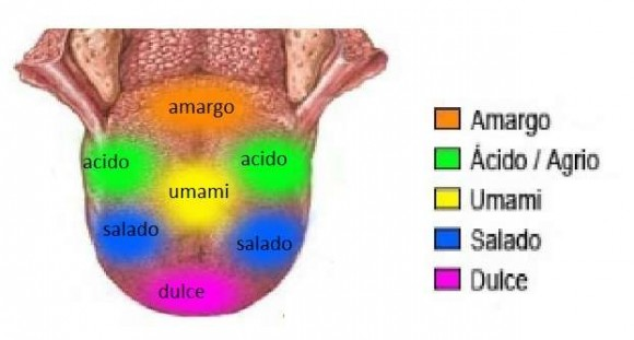 dibujo20161210-mapa-de-la-lengua-sabores-umami