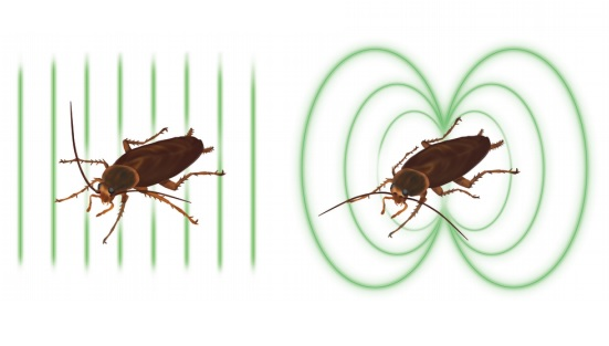 Dibujo20170213 Sketch experiment American cockroaches in strong magnetic field arxiv 1702 00538