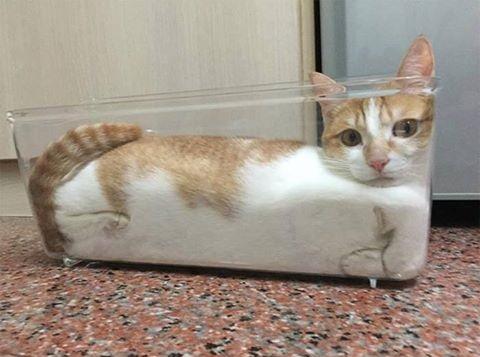 Dibujo20170918 air liquid solid and cat meowbox cat rheology