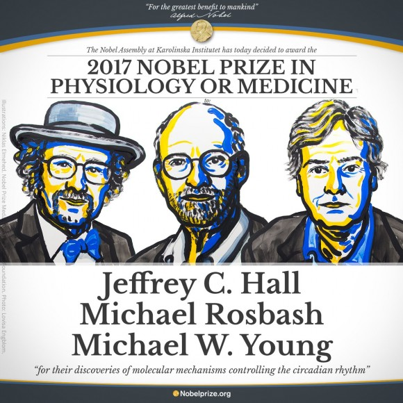 Dibujo20171002 hall rosbash young circadian rhythms nobel prize medicine 2017