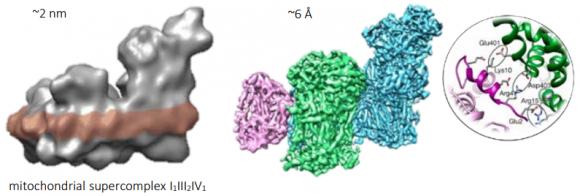 Dibujo20171005 mitochondrial supercomplex cryo-electron image at 6 A nobelprize org