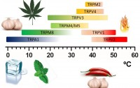 Dibujo20171219 temperature sensitivity thermoTRP channels Castillo et al 2017 Phys Biol