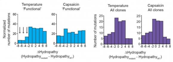 Dibujo20171220 Hydropathy changes induced by mutations Jason Omar Sosa Pagan phd duke university