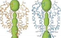 Dibujo20171226 Open and closed ion channel pore trpv6 nature25182-f3