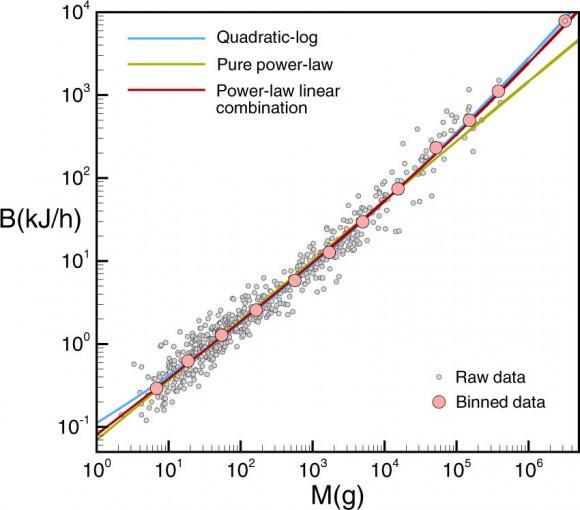 Dibujo20180131 thermodynamic origin of metabolic scaling 41598_2018_19853_Fig1_Scientific_Reports_Nature_com
