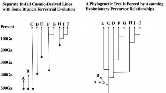 Dibujo20180501 phylogenetic tree alternatives doi 10 1016 j pbiomolbio 2018 03 004