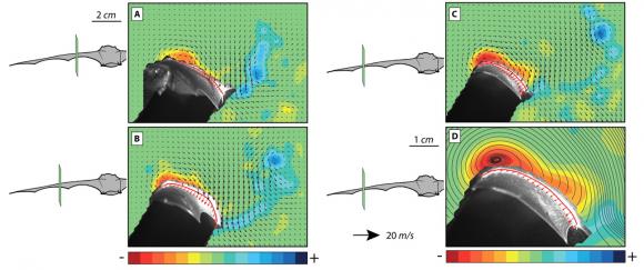 Dibujo20160430 bat flight aerodynamics science mag