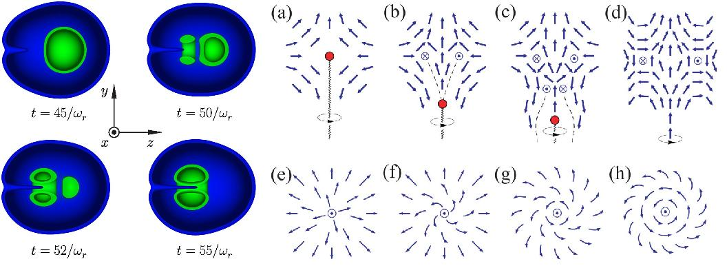 Dibujo20090716_Particle_density_at_different_stages_of_monopole_formation_and_Unwinding_of_monopole_defect