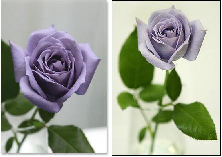 Una rosa azul para mi mujer en el día de San Valentín (o qué regalar en San Valentín el próximo año)