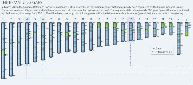Todav a no se ha completado la secuenciaci n del genoma for En 2003 se completo la secuenciacion del humano