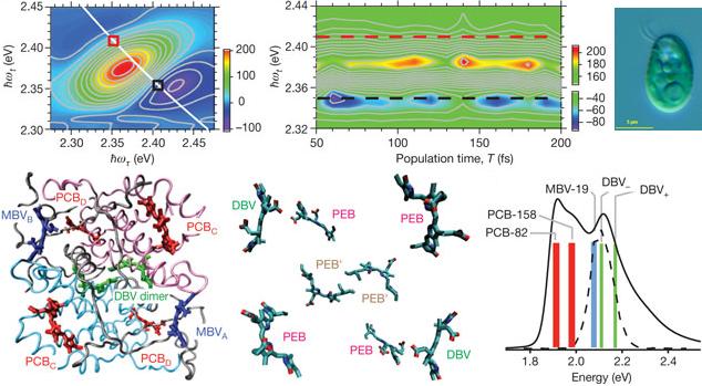 Resultado de imagen de conexiones cuánticas de la biología