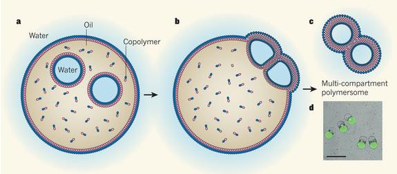 II Carnaval de Biología: Hacia los orgánulos celulares artificiales ...