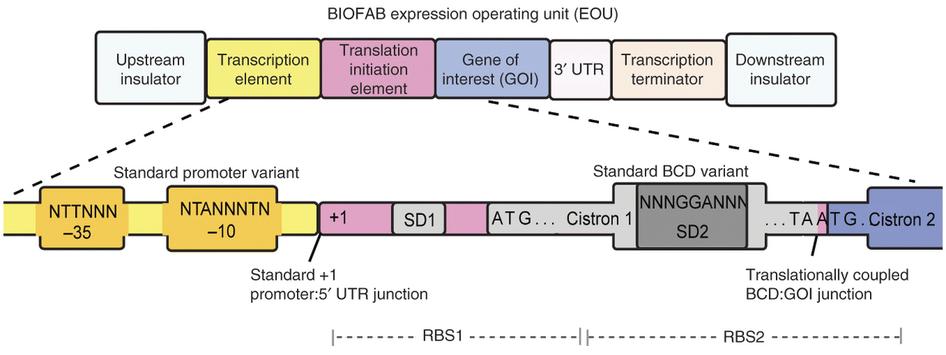 Dibujo20130314 Rules for regularizing gene expression