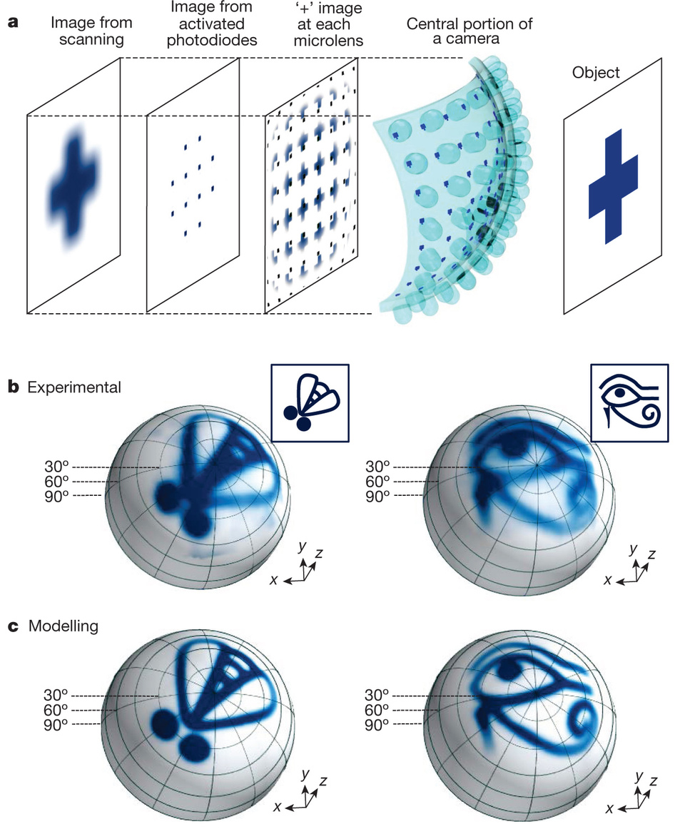 Dibujo20130506 operating principles of hemispherical apposition compound eye camera and representative pictures
