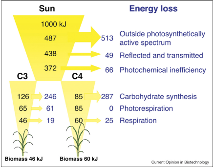 Dibujo20130519 Minimum energy losses calculated for 1000 kJ of incident solar radiation at each discrete step of the plant photosynthetic process
