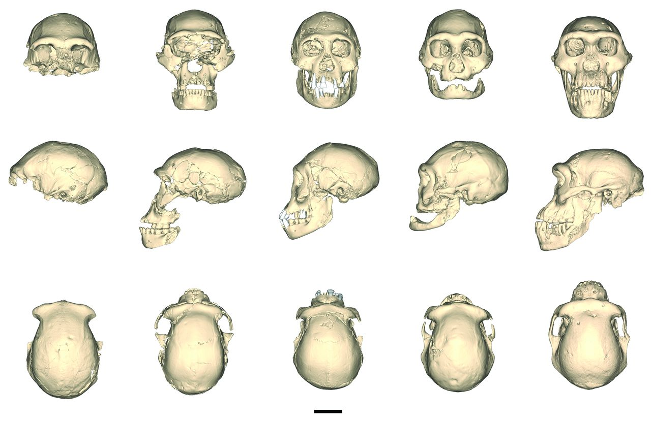 Francis en #rosavientos: El cráneo humano más polémico | Ciencia ...