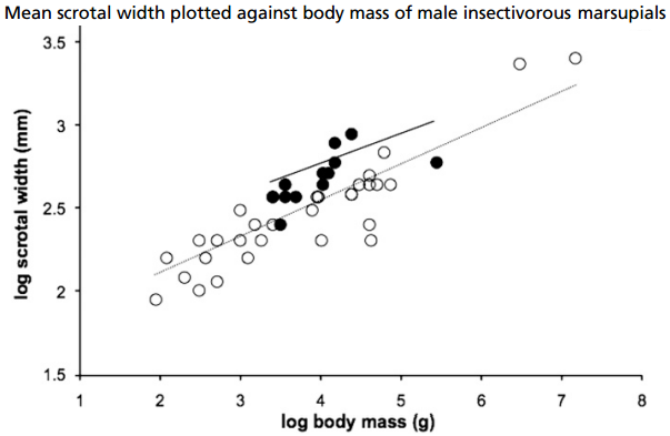 Dibujo20131021 mean scrotal width plotted against body mass of male insectivorous marsupials