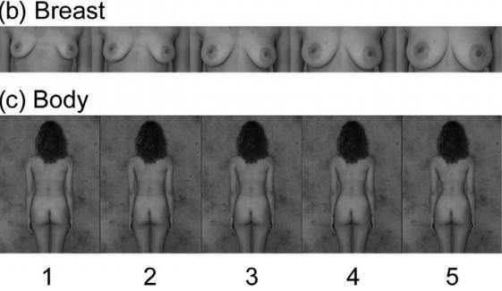 Dibujo20131114 simuli images female breast and body - sciencedirect com