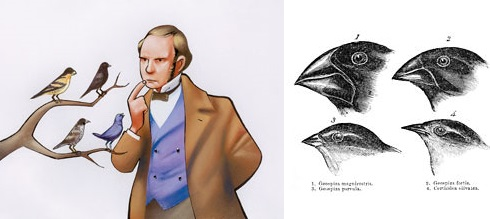 Dibujo20131211 myth darwin finches - evolution