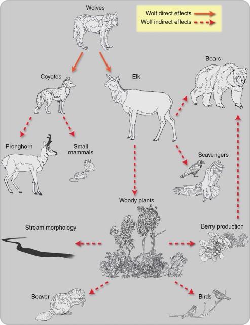 Dibujo20131109 wolves interaction to megafauna