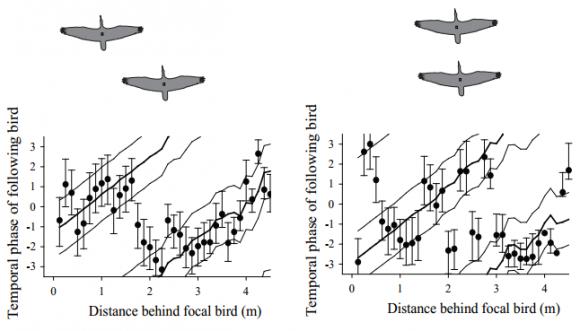 Dibujo20140115 temporal phase of following bird versus distance behind focal bird
