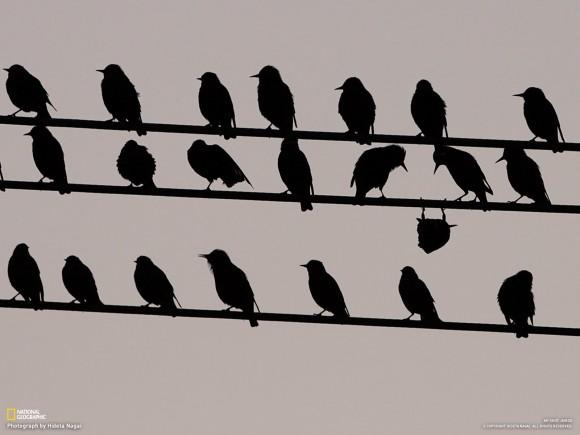 Dibujo20140712 upside-down bird on cable - national geographic - hideta nagai