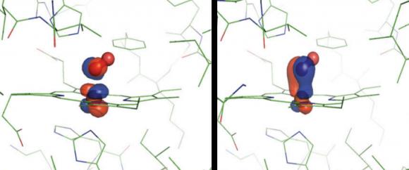 Dibujo20140729 NBO analysis of the DFT plus DMFT Green function for MbO2 - pnas org