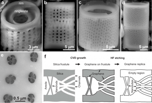 Dibujo20140825 sem images diatom frustule and making graphene replicas - scientific reports