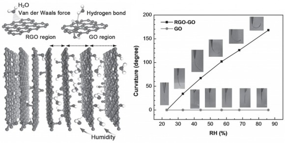 Dibujo20141030 Schematic illustration interaction between water molecules and graphene nanosheets - Moisture-responsive properties- advanced materials