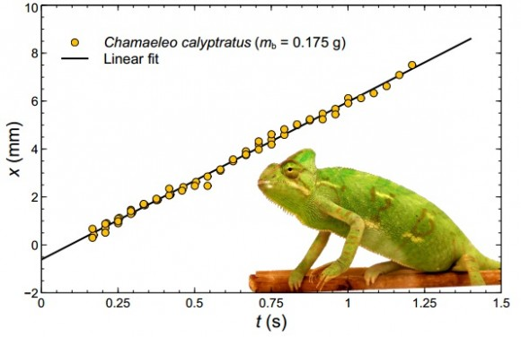 Dibujo20141126 rheological measurement mucus chameleon - arxiv org
